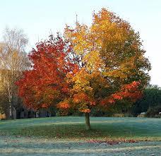 cadono le foglie